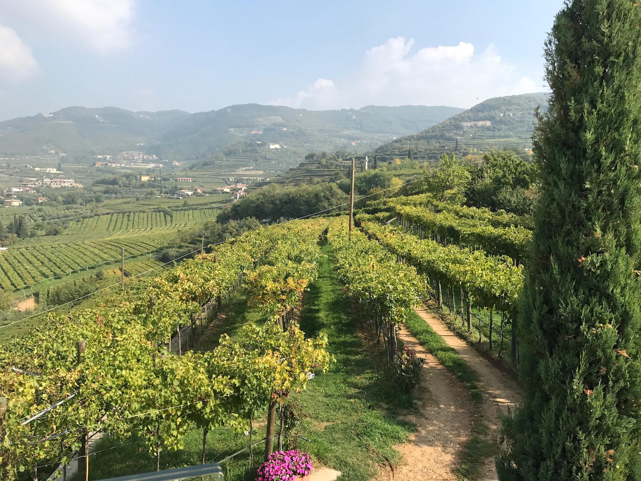 Quintarelli Winery, Italy